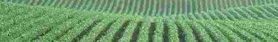 cornfield-small.jpg